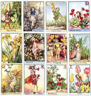 *Michael Miller* Alphabet Flower Fairies Panel